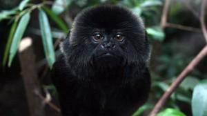 teaching monkeys to mediate
