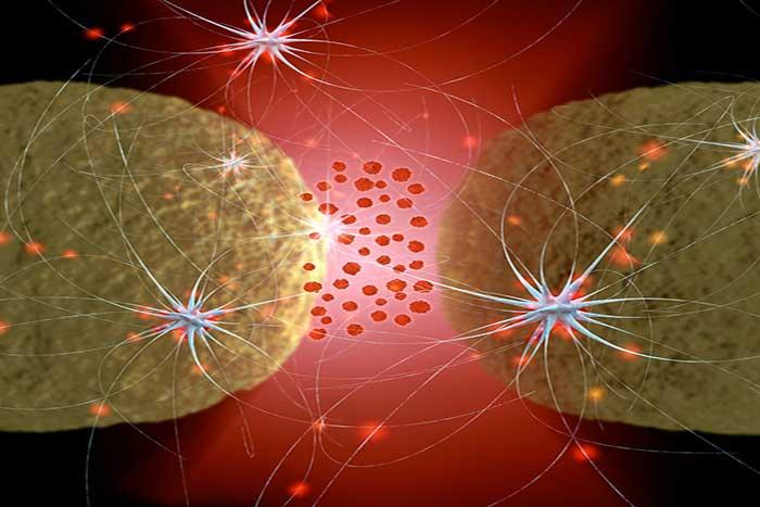 nerve-synapse-1.2