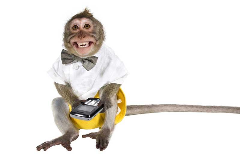 chattering-monkey-1.2